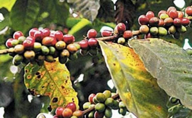 Agroquímicos vs. agricultura orgánica